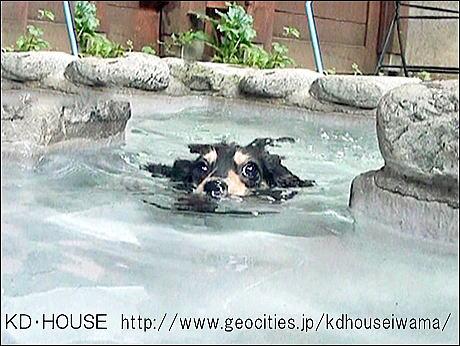 c泳ぐの大好き (2).jpg